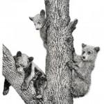 Bear Cubs 002 lr
